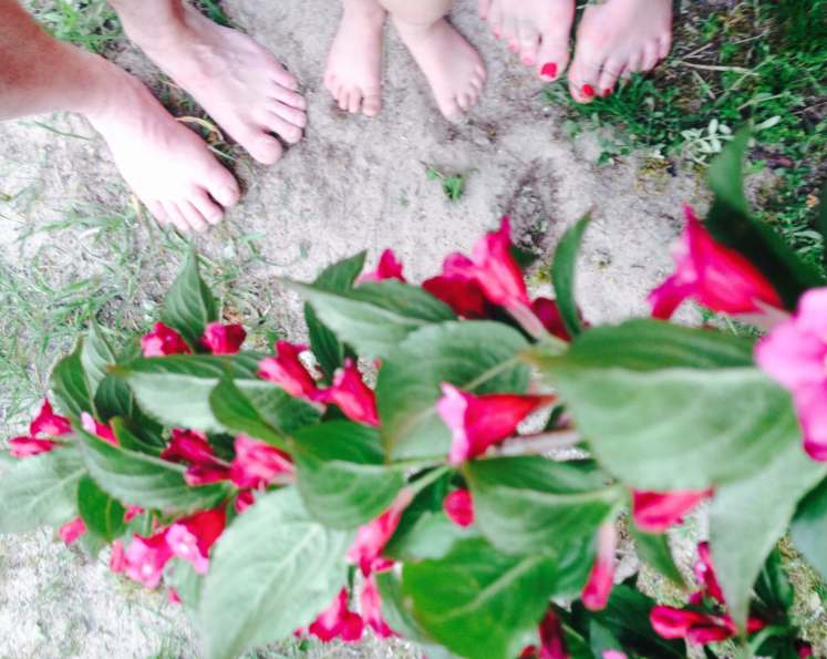 Pinke Blumen ° Blumenfotografie
