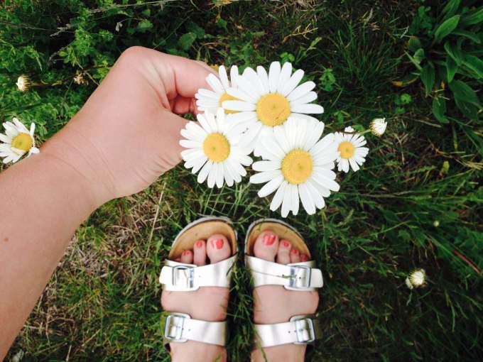 Margeriten ° Blumenfotografie