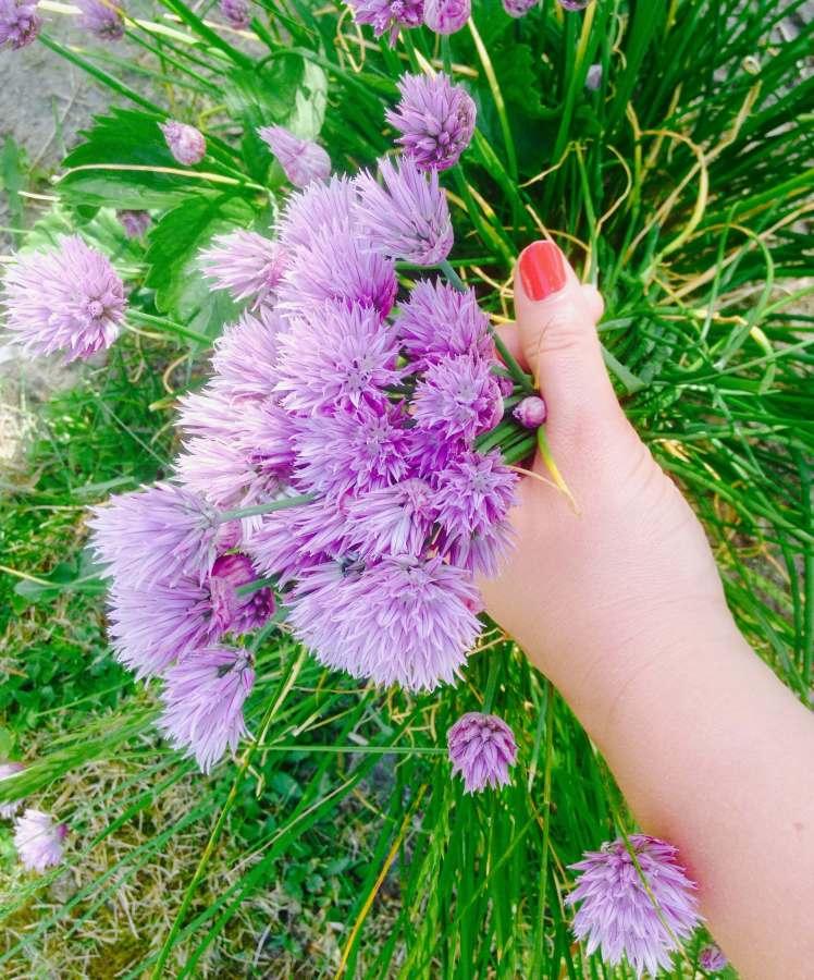 Lila Blumen ° Blumenfotografie
