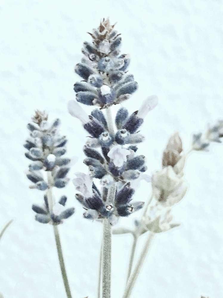 DIY: Blumen Dekoration Lavendel