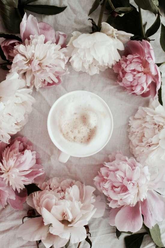 Blumenfotografie ° Pfingstrosen in Weiß und Rosa