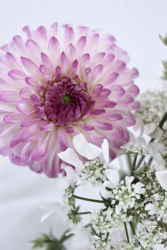 DIY-Blumen-Deko: Dahlien mit Wiesenkraut