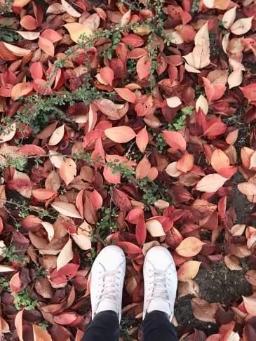 Ideen für den Herbst - Eine Bucket Liste