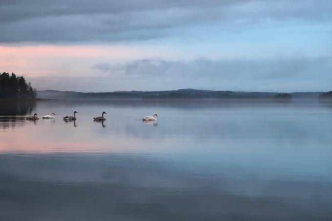 swan-398663_1920